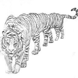 @ten-foot-tiger